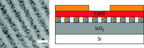 (a) TEM images of a blend of PS-P2VP with 20 wt % Au NPs; (b) Schematic representation of the memory devices used in this study